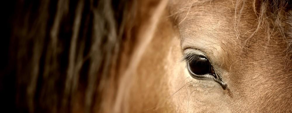 COVID Pferderechts-Info: Ist Reitunterricht für Anfänger erlaubt?