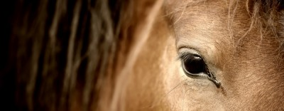 Corona-Pferderechts-Info: Zusammenhang zwischen Einstellvertrag und Betretungsverbot
